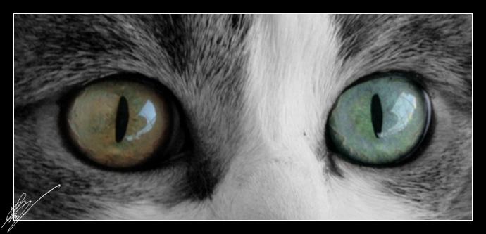 Through Her Eyes. by belialrage