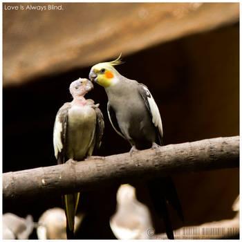 love is blind by Priyadarshi