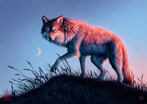 Nightfall by kippycube