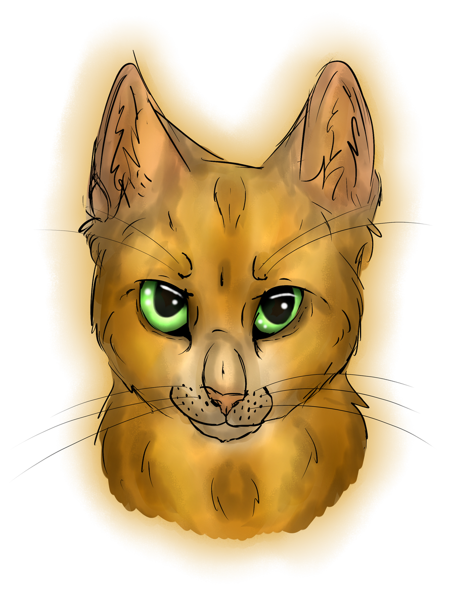 Orange cat portrait x3 by Afna2ooo