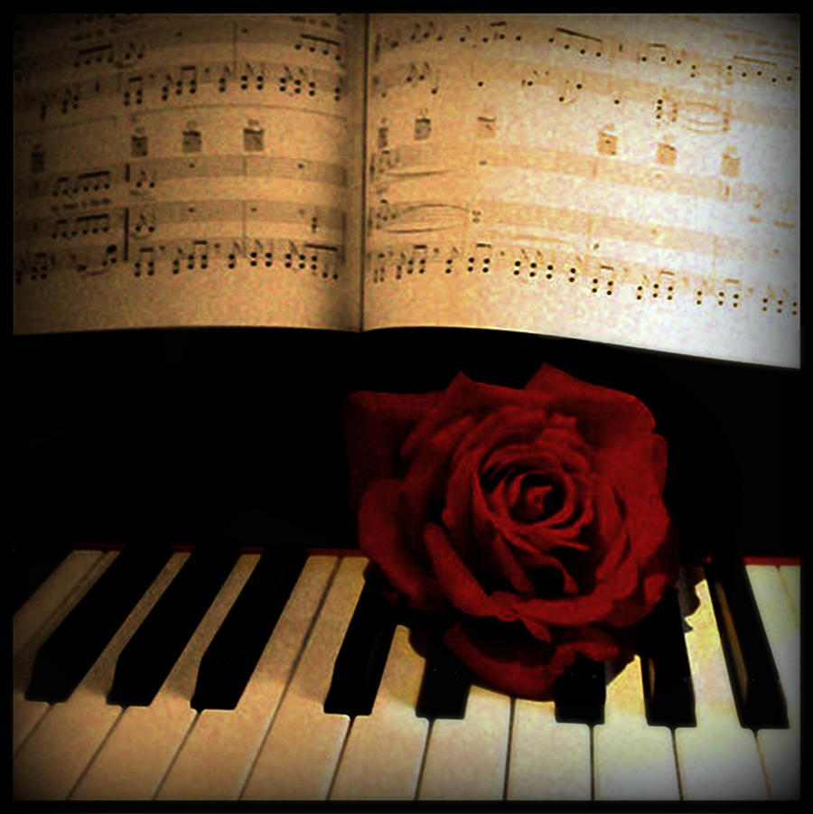 Rose on piano by MyzzetyPiano With Rose Photography