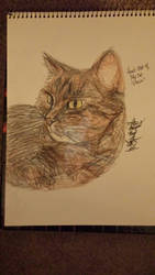 Example- Traditional Head Shot of my cat- Presia