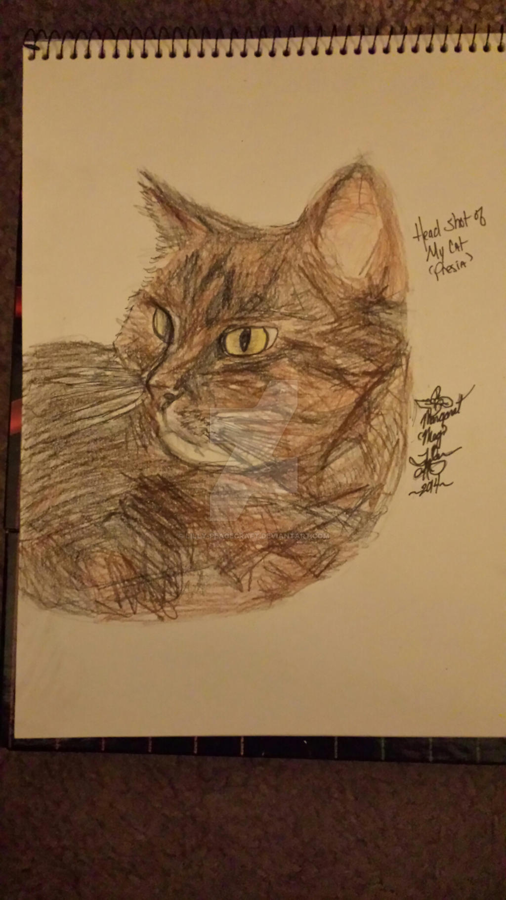 Example- Traditional Head Shot of my cat- Presia by lilly-peacecraft