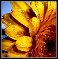 Flower 1 by MysteriousTremendum
