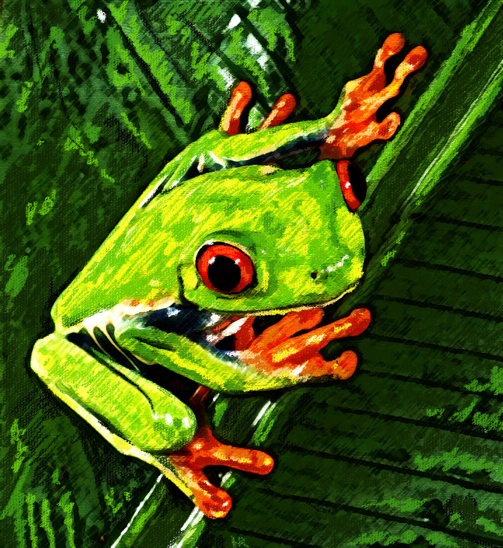 Froggie Fella