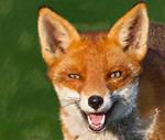 FoxPortrait