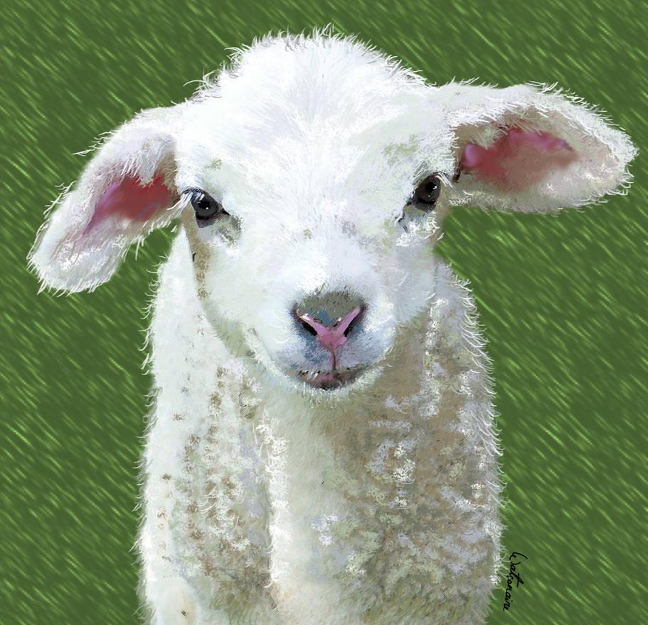 Cheeky Lamb