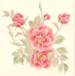 [Watercolor] Rose