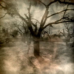 orchard by spokojnysen
