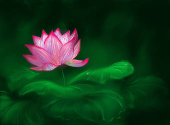 Water Lily by whyzhou