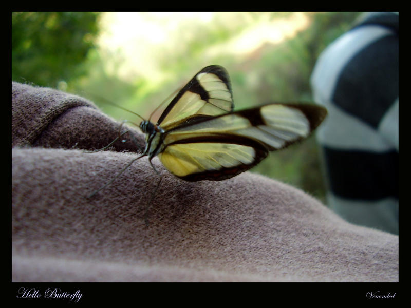 Hello Butterfly by venonded