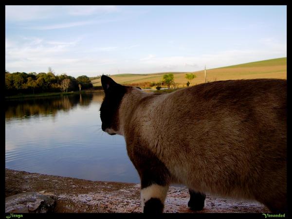 Jiraya the Cat by venonded