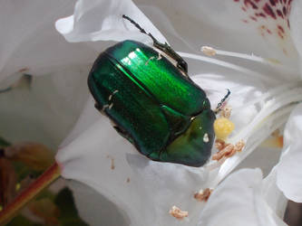 Green by Nevestella
