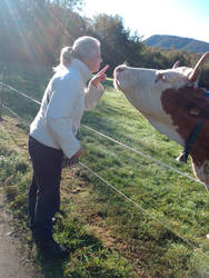 A cow and me