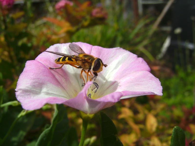 Mmmmmmmmm, Nectar