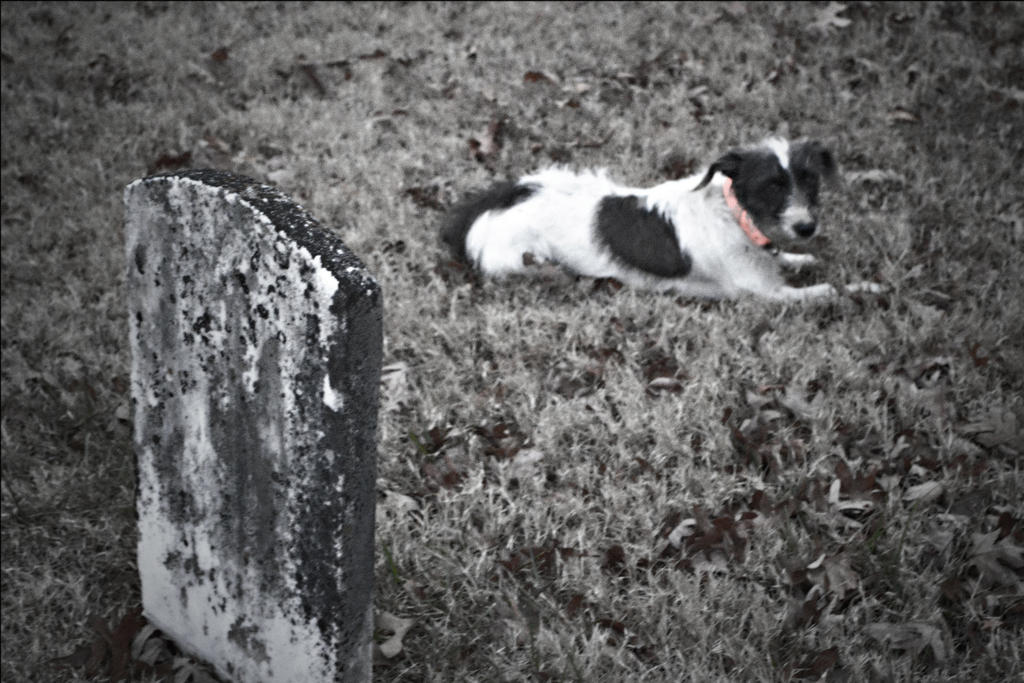 graveyard dog by songofabanshee