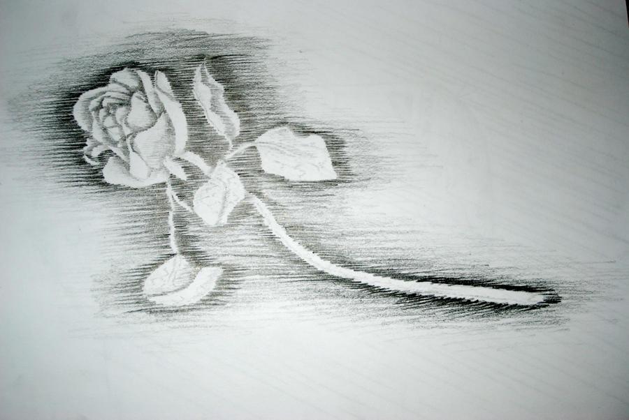 Line Drawing Net : Implied line rose by cirque de fleur on deviantart