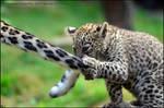 Mummy's tail