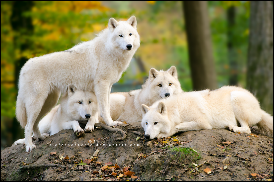 Family portrait by Tiefenschaerfe