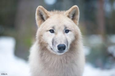 White coat, dark eyes