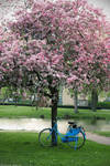 Blue Bike and the Cherry Tree
