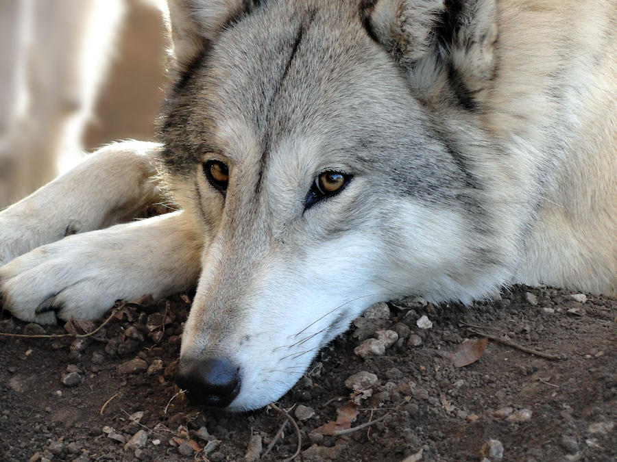 Thanksgiving 2010: Kiowa 11
