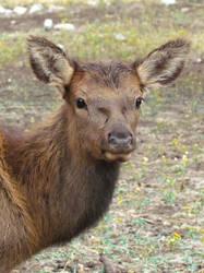 WW Oct27: Elk 1