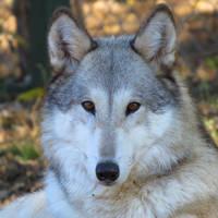 Kiowa at six years old