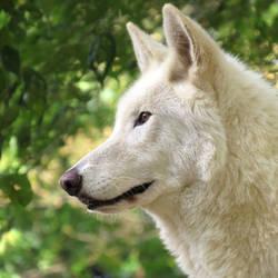 Lakota at six years old