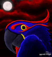 parrots dream