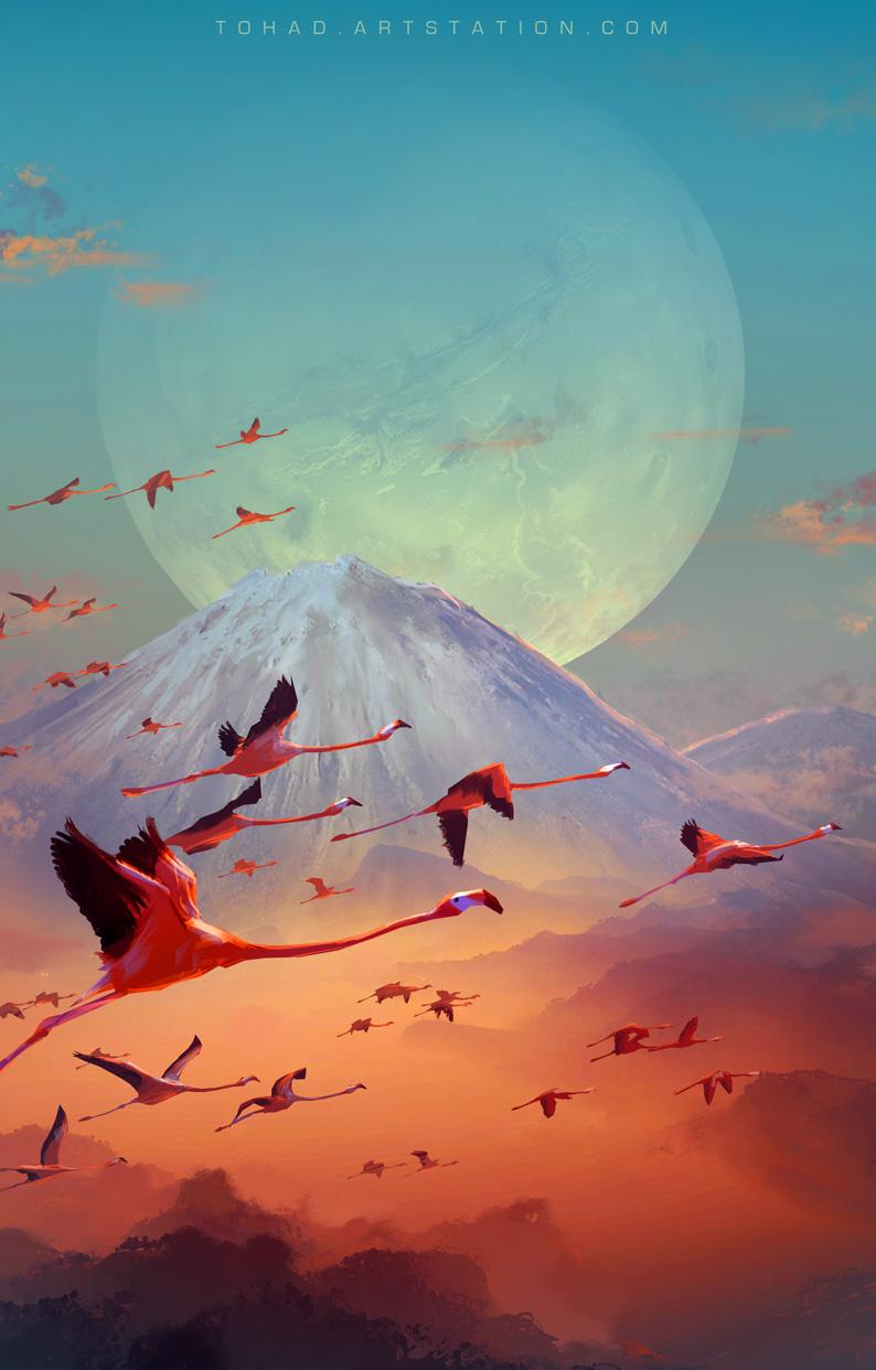 Flamingo by Tohad