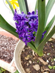 purple flowers by Kikipanda