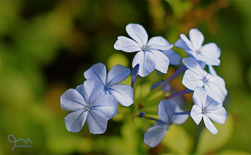 Flowers 3 by odednirusty