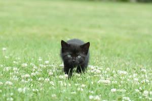 My little predator by Await