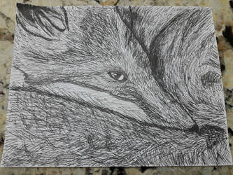 Fox Drawing by pd1705