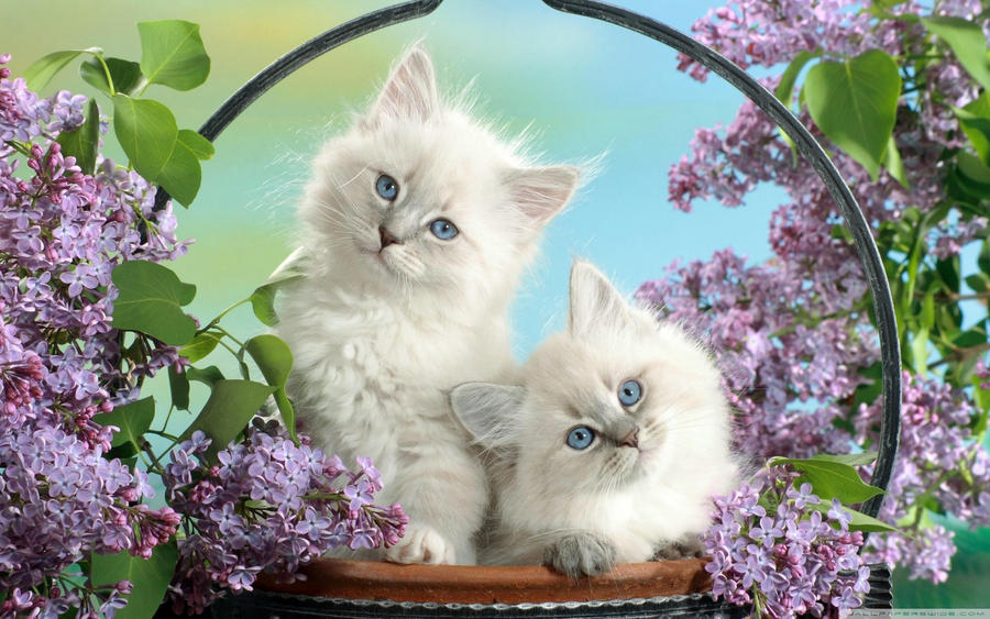 Beautiful Cats by XArmonyAngel2012X
