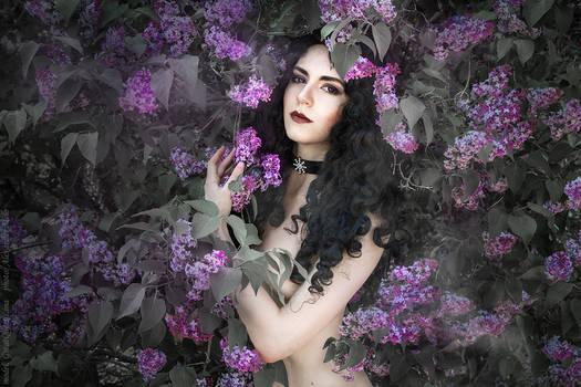 Saga o wiedzminie - Yennefer and lilac_2