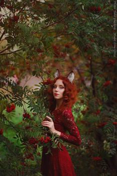 Red fox_4