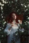 White roses_4