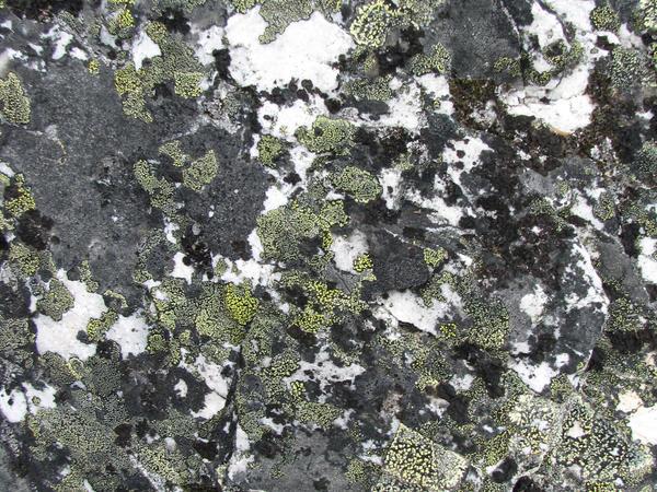 Crazy Stone-Texture by Swordexpert-Stock