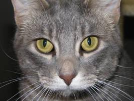Kai cat-Stock by Swordexpert-Stock