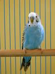 Birdie-Stock
