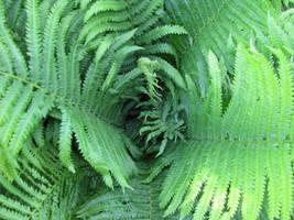Fern spiral-stock