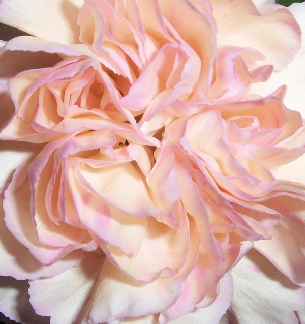 Flower Texture-Stock by Swordexpert-Stock