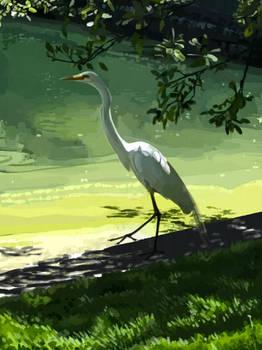 egrets (i've had a few...)