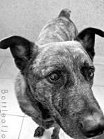 Moj pas by jojo--love