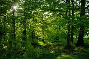 Pure green by eaglex