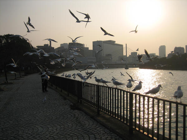 Osaka Gulls by Everm1nd