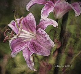 Lillies by DikDanger