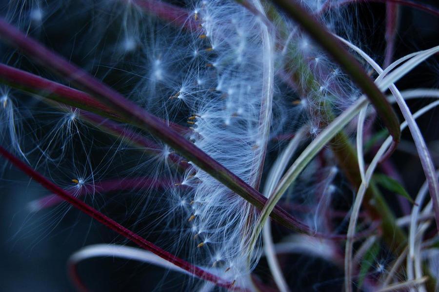 Feathered by Aloof-I